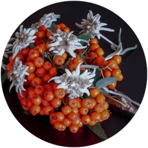 Edelweiss is a natural anti-aging ingredient