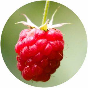 Raspberry Oil is rich in Ellagic acid, a wrinkle-reducing polyphenol compound