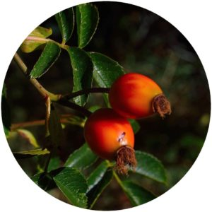 Goji Berry definition on Style Chicks Defining Beauty Glossary