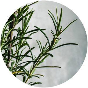 Rosemary for Skincare on StyleChicks