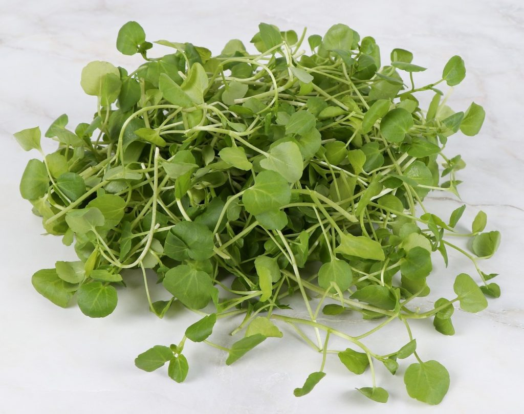 Watercress helps makes Type Collagen III in dermal cells