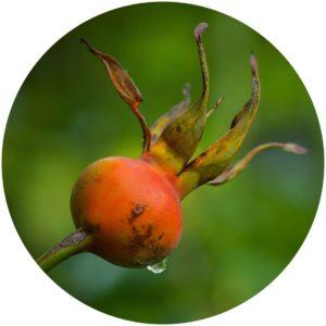 Passion Eye Serum contains Rosehip refines skin