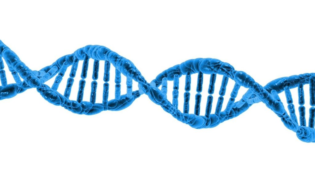 Improved DNA repair enabled better health while looking and feeling better