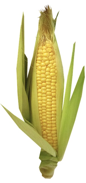 Zayea Propanediol and Zea Mays come from corn