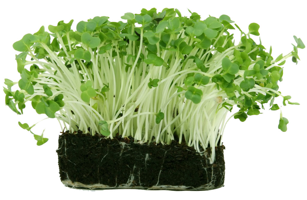 Watercress supports collagen and elastin within the skin