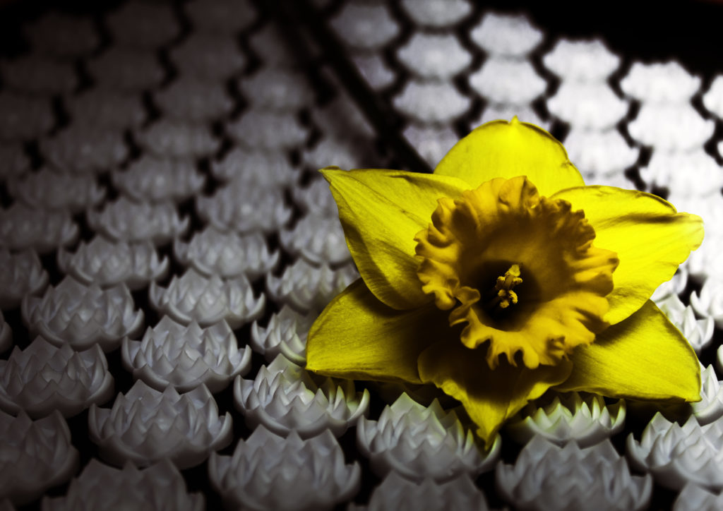 Close up of the lotus flower spikes that provide steady but comfortable acupressure points