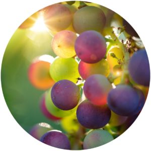 StyleChicks.com explains Kat Burki Nutrient-C Eye Cream ingredients. grape stem cells