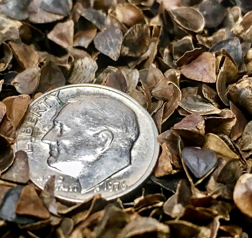 A dime for scale amongst the Pinetales hull filling. The hulls are hard but thin and tiny, so they adjust to weight.