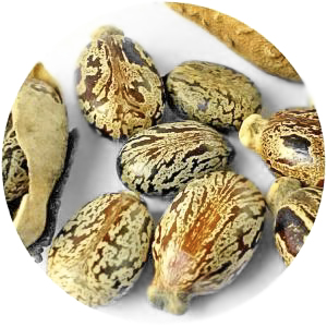 Castor seed oil is a humectant