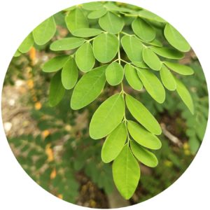 StyleChicks Beauty Glossary definition of Moringa Oil
