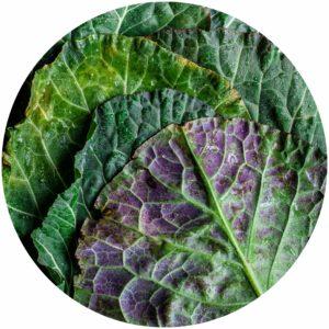 Kale for skin