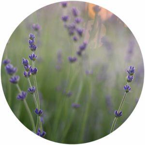 Kat Burki Kb5 Eye Recovery Masks has Lavender to promote skin regeneration