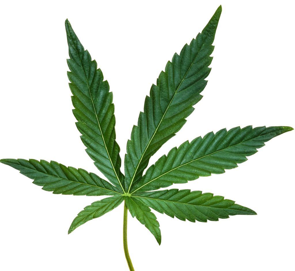 CBD Oil comes from Cannabis Sativa