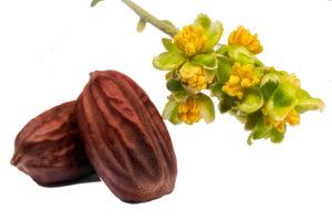 Jojoba Seed Oil
