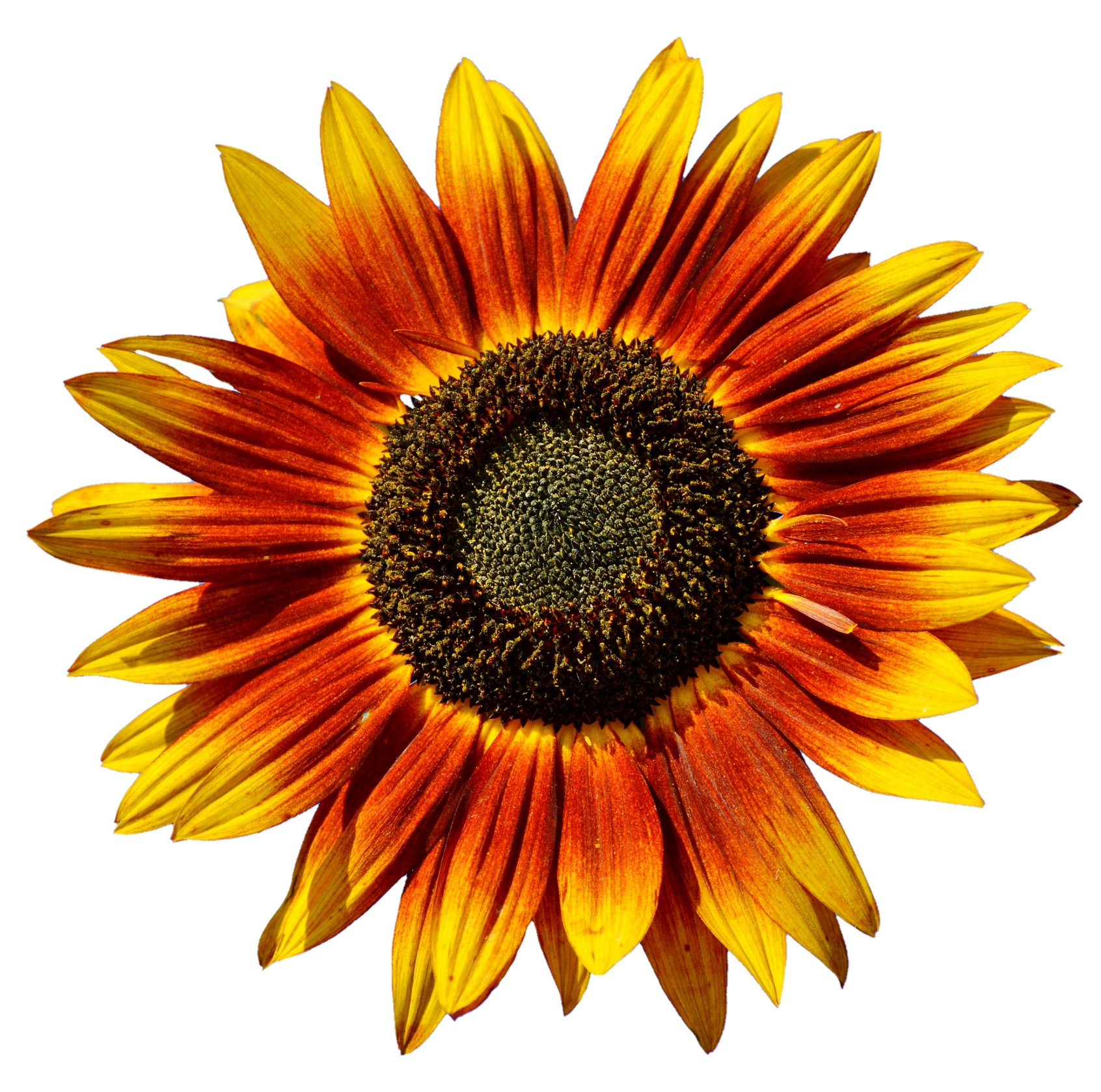 Passion Eye Serum contains Vitamin E derived from sunflowers