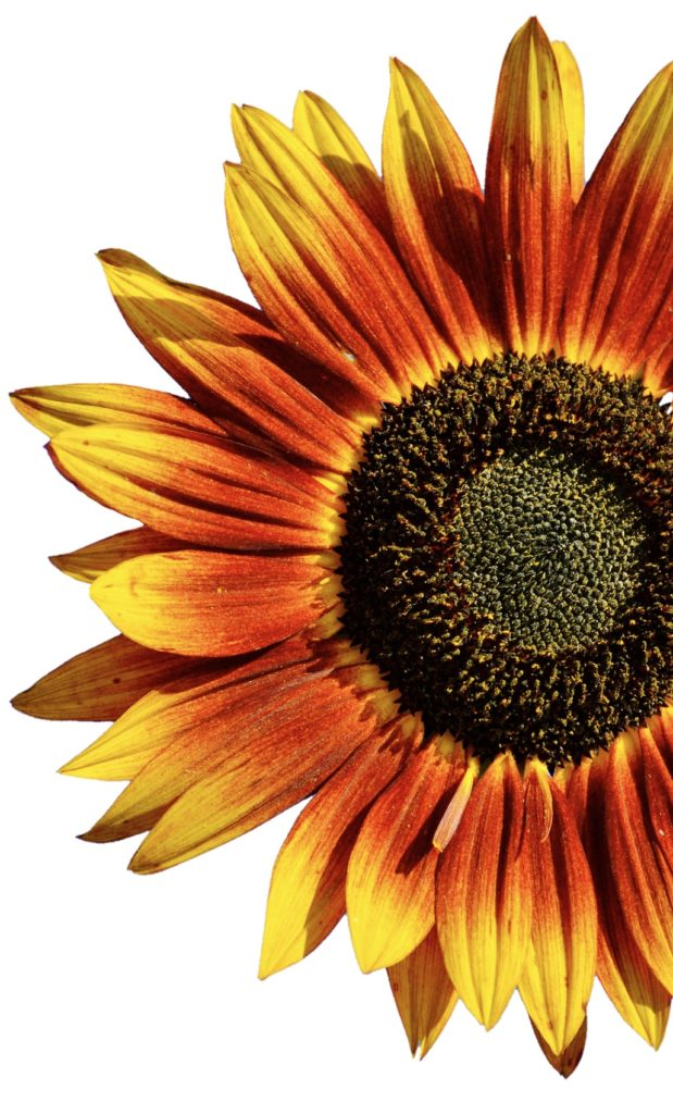 This formula has a hydrating Sunflower Oil base combined with soothing, skin rejuvenating natural ingredients