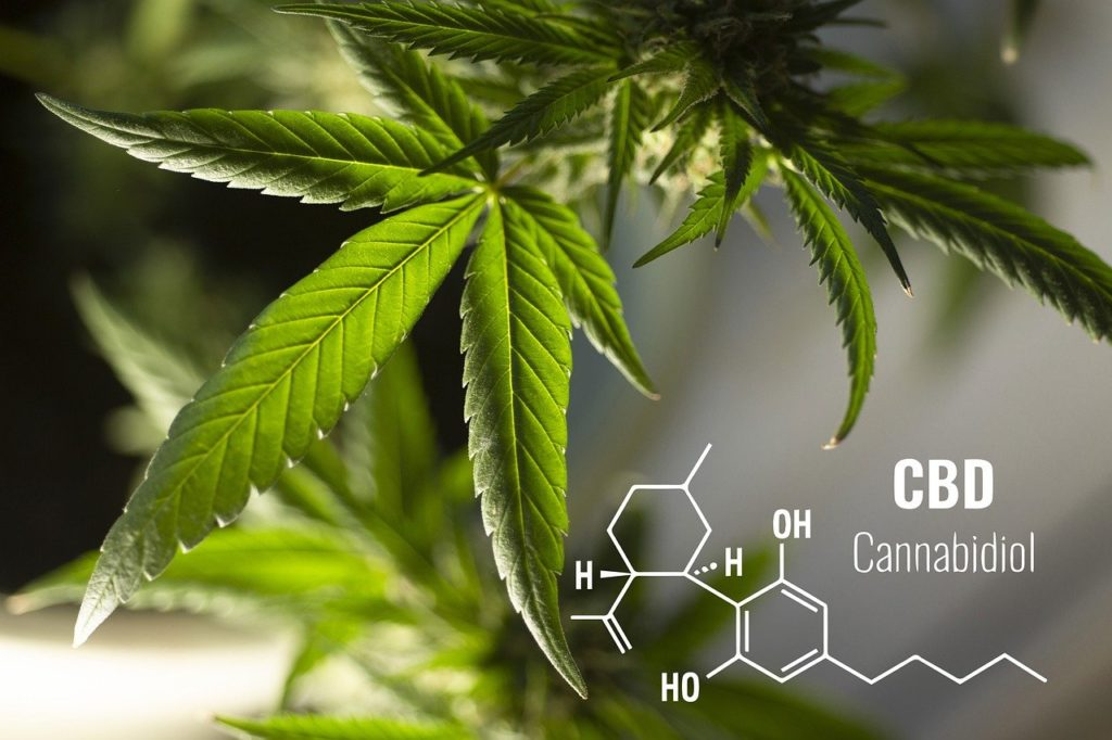 CBD Research